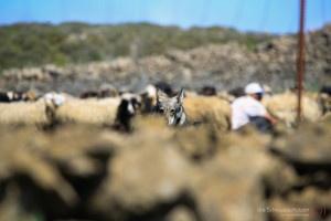 Hirte mit Hütehund auf El Hierro
