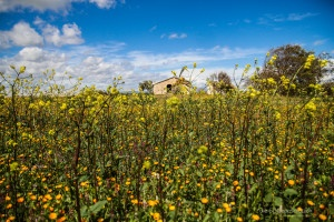 Frühling in Sizilien