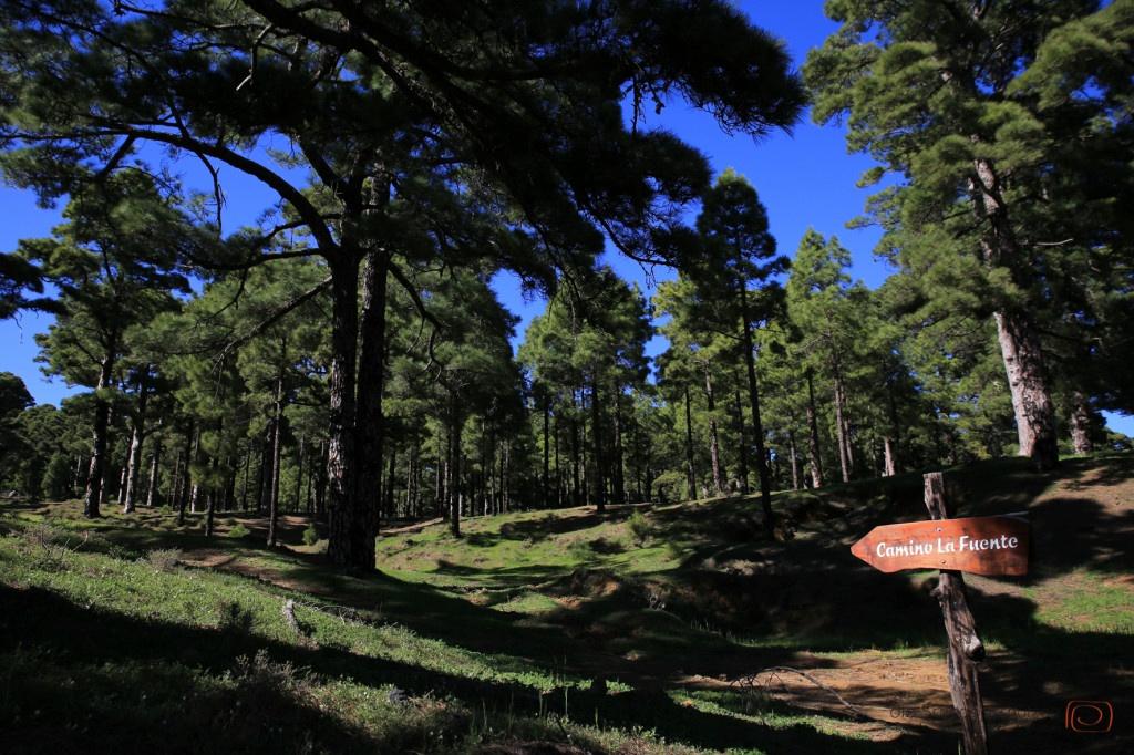 Wanderwege durch den Wald auf El #Hierro